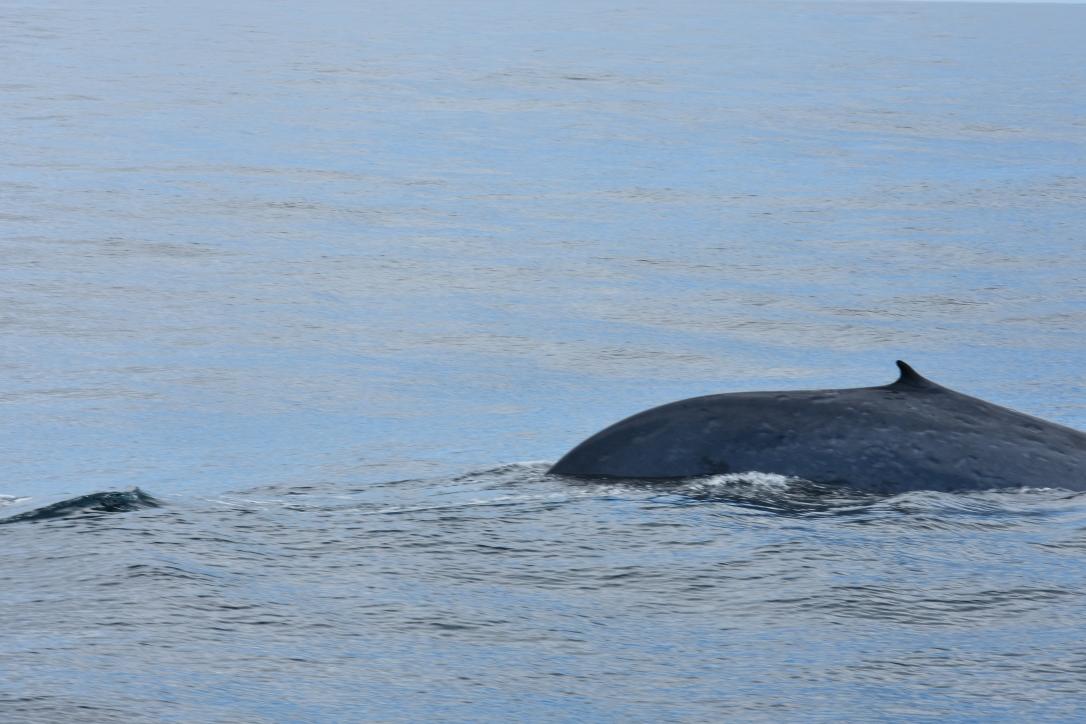 Akelarre_Blue Whale