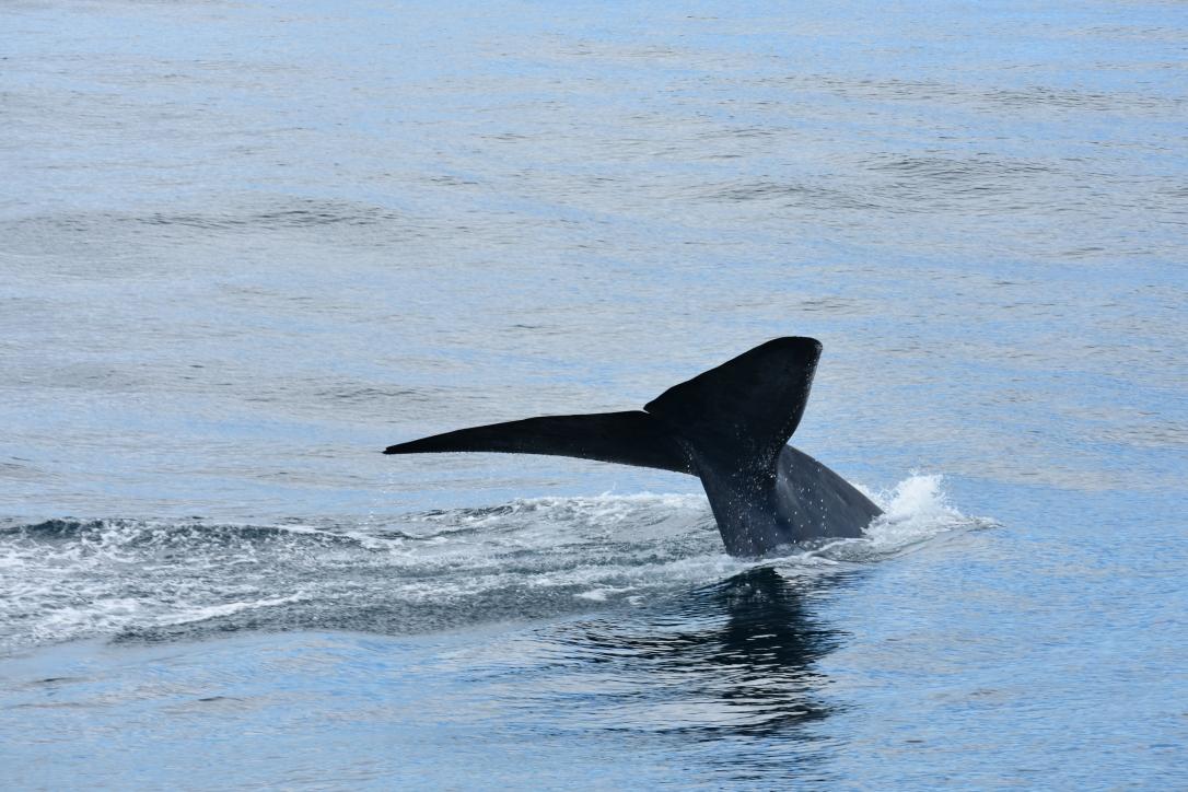 Akelarre_blue whale3